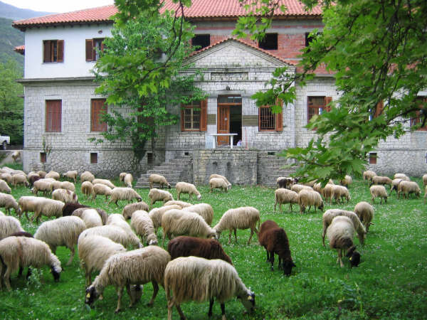 museum-with-sheep.jpg